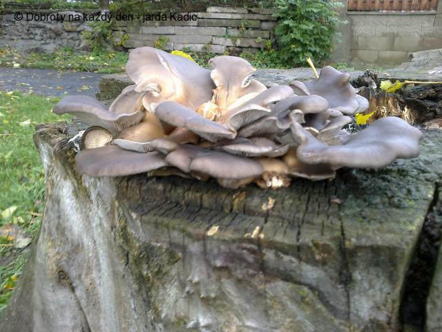 Nekupujte draze houby, nasbirejte si je!