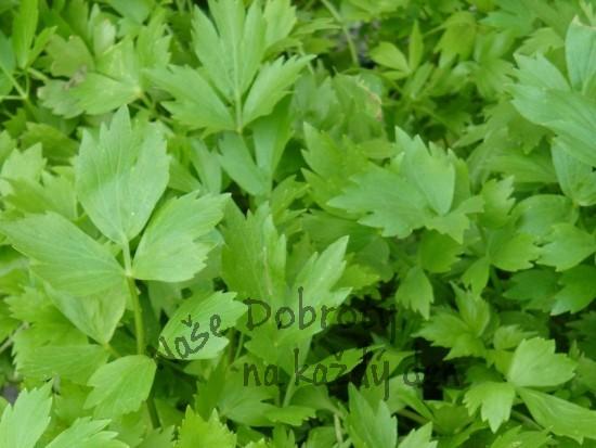 Zelené koření – čerstvé byliny v kuchyni 1. část